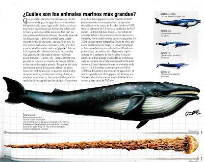 Cuales son los animales marinos mas grandes 1 de 2