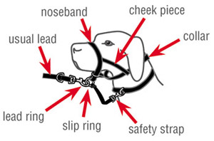 purina petlife harness instructions