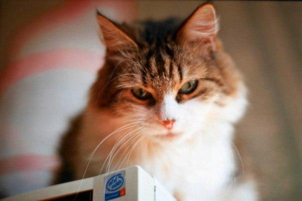 Паззлы онлайн с кошками