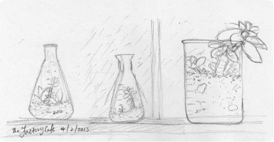Quick pencil sketch inspired by the Factory Cafe