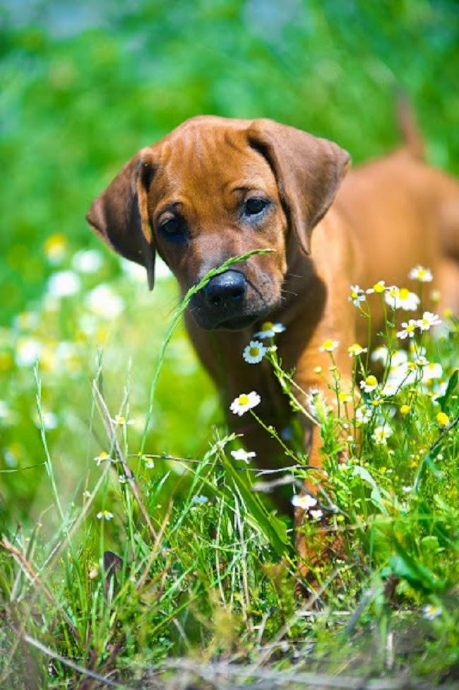 Ziołolecznictwo jako kuracja dla psa