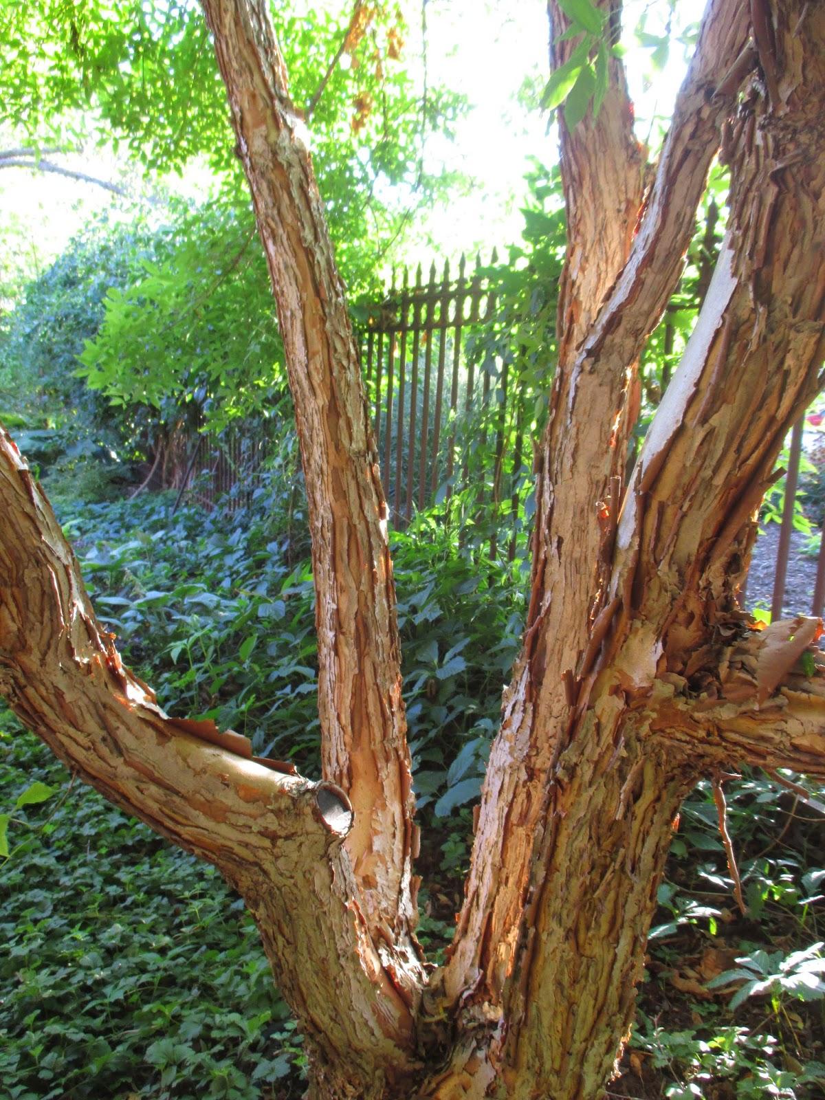 Barking Up the Right Tree - Rotary Botanical Gardens