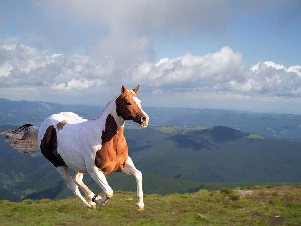 My Wallpapers Corner  Best Wild Horse Running Wallpaper