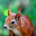 Das Testhörnchen