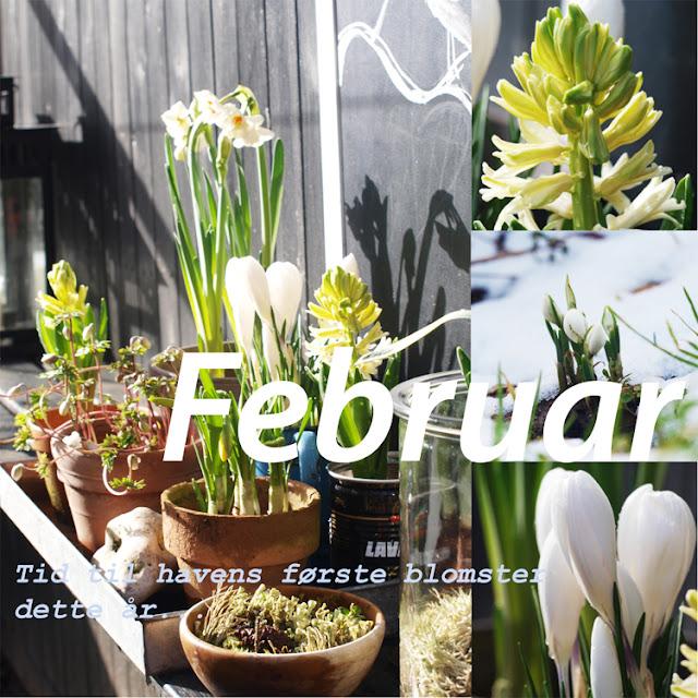 """Sådan startes foråret i haven viser havebloggen i """"Året der gik 2015"""""""