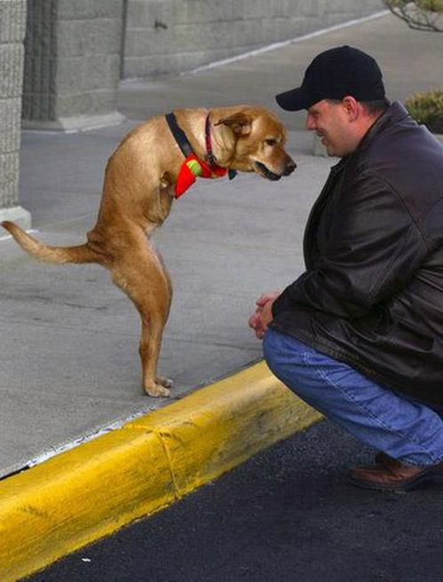 собака без передних лап