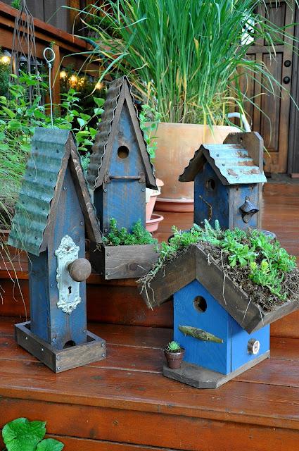1000 images about birds on pinterest garden photos. Black Bedroom Furniture Sets. Home Design Ideas