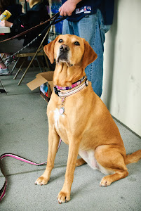 Kim's Pet Dog