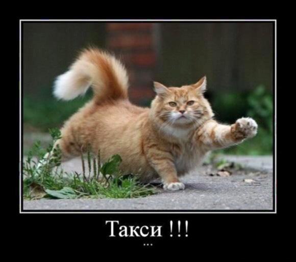запор у кошки лечение в домашних условиях вазелиновым маслом