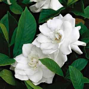 Cuestionario imagenes 2.o Gardenias
