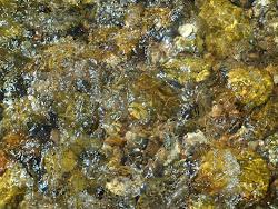 Nas aguas da cachoeira de Coroa Grande/Itaguai RJ