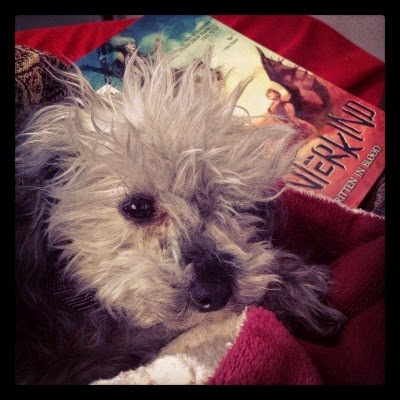 Murchie raises his head to fix the camera with a tired stare. He's nestled into a blanket nest Behind him is a trade paperback copy of Written In Blood. A winged woman in a leather vest is visible to one side of the illustration.