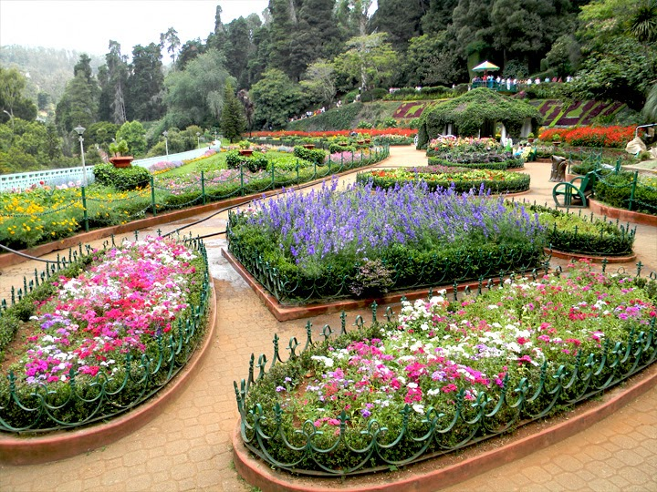 Honymoon Packages in Ooty