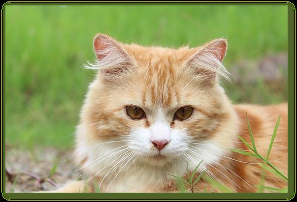 Articol despre vaccinarile si deparazitarea pisicilor