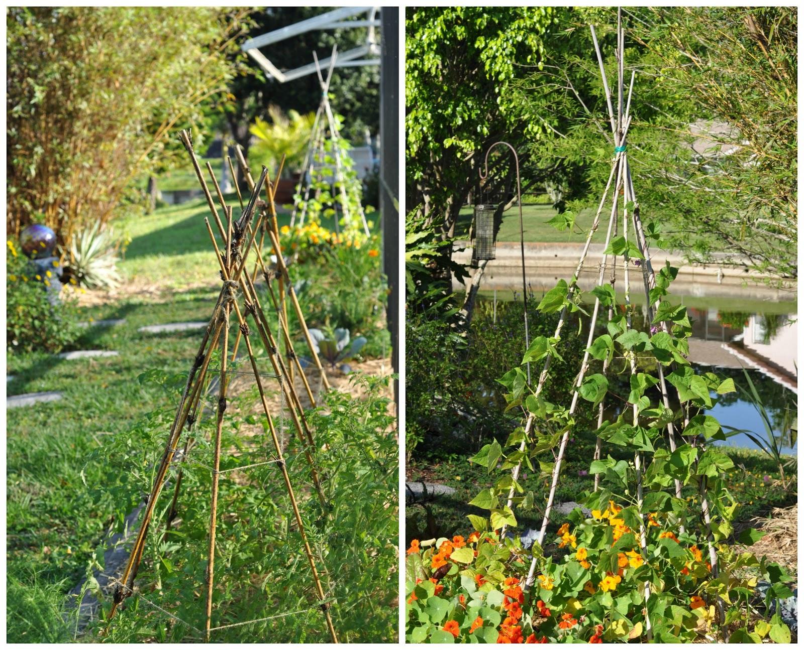 a natural nester bamboo in the garden