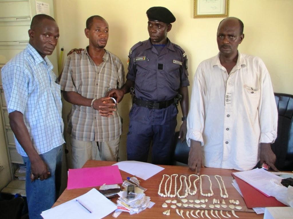Kaba entouré par les agents d'Interpol et un agent assermenté du Ministère de l'environnement