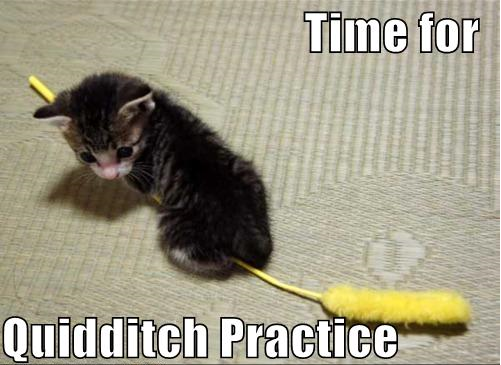 School-of-Witch-craft-and-Kitten-ry-cat-