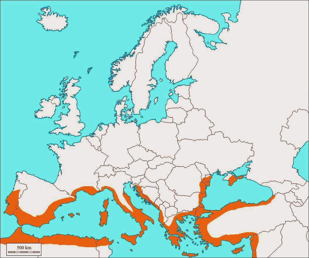 Imparare con la geografia 13 la regione mediterranea for Temperatura tartarughe