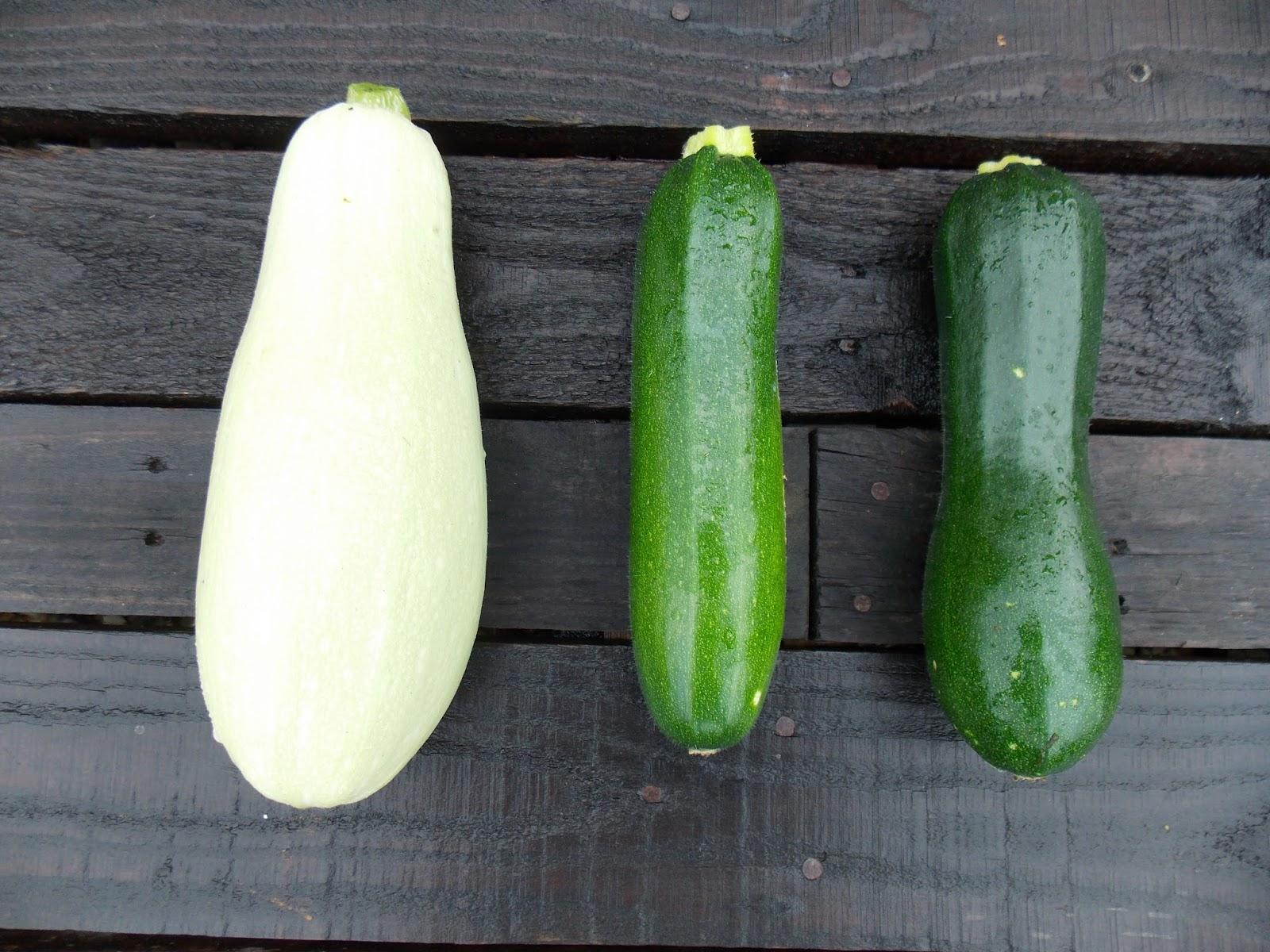 Ecolo bio nature permaculture urbaine et jardinage bio les vari t s de courgettes de cette ann e - Feuille de courgette blanche ...