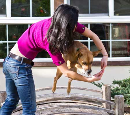 Many Dog Tricks You Should Know Jump through your arms