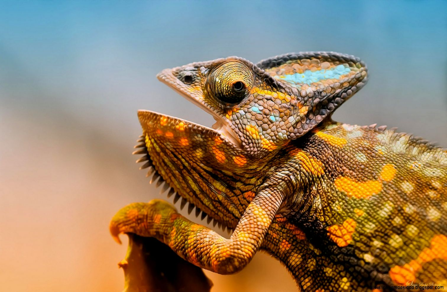 Colorful Chameleon Lizard