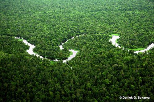 NGO : Moratorium Hutan Harus Berlanjut