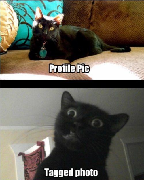 gatos, imagens, humor, fotos, facebook, foto do perfil, fotos que os amigos te marcaram, eu adoro morar na internet