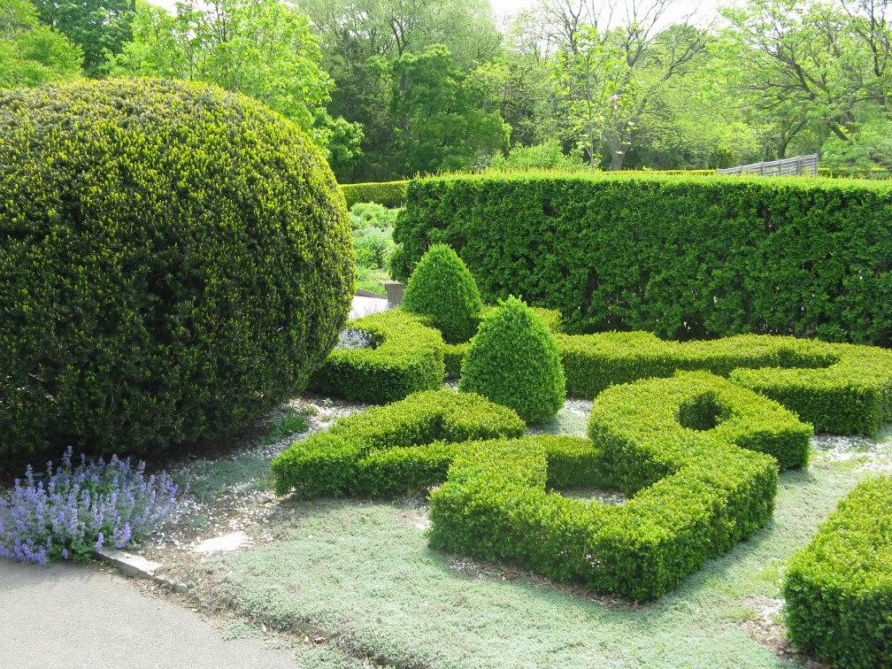 Royal Botanical Gardens clipped boxwoods Laking  knot garden by garden muses-not another Toronto gardening blog