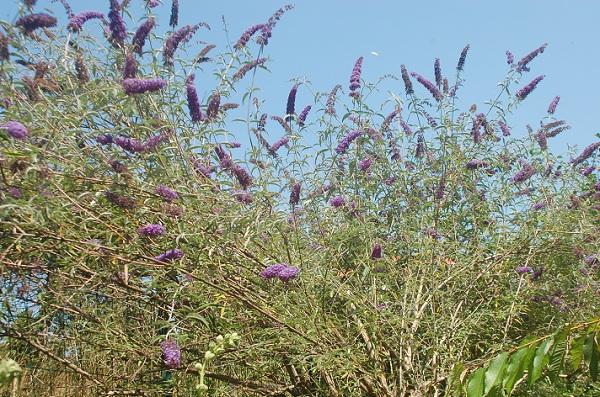 L'albero Delle Farfalle