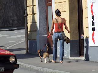 como enseñar a mi perro a no tirar de la correa