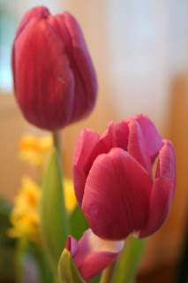 Focus on life: The beauty of flowers: The tulips :: All Pretty Things