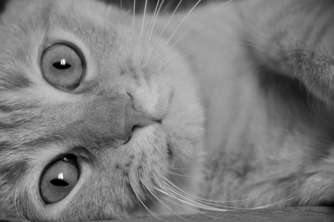 Fine stagione il gatto in un appartamento vuoto le chat for Ameublement traduzione