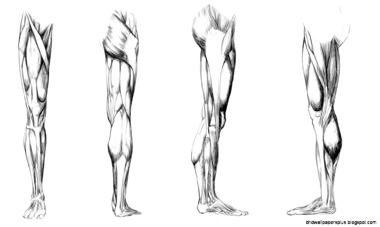 Leg Anatomy Hd Wallpapers Plus
