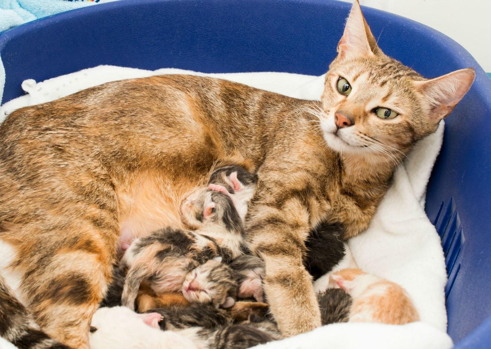 Как в домашних условиях вызвать схватки у кошки
