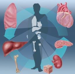 Organ surgery in India