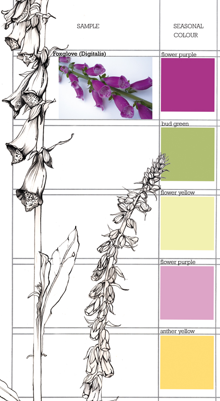 Planet Sam: Colour from the Season - Foxglove purple