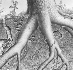 Sebagai suatu sistem tubuh alam tanah mengandung berbagai komponen yang menunjang kehidupan makhluk hidup