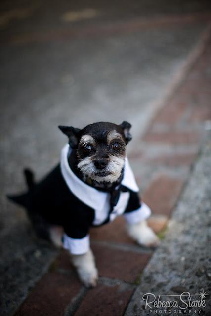 perro vestido de novio