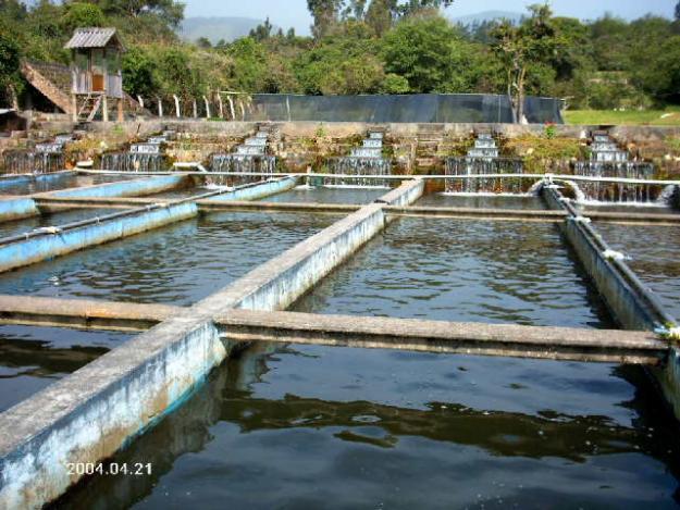 piscicultura On estanques para piscicultura