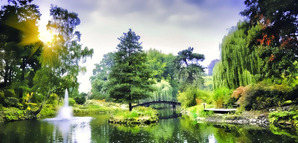Banco de im genes plantas flores y jardines exuberantes for Arboles bonitos de jardin