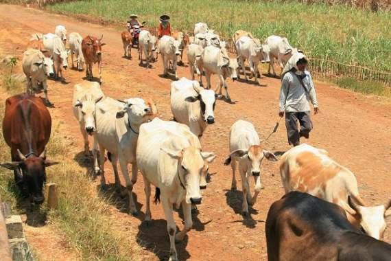 Bukan hanya kiris ekonomi, krisis moral, Indonesia pun terancam krisis pangan