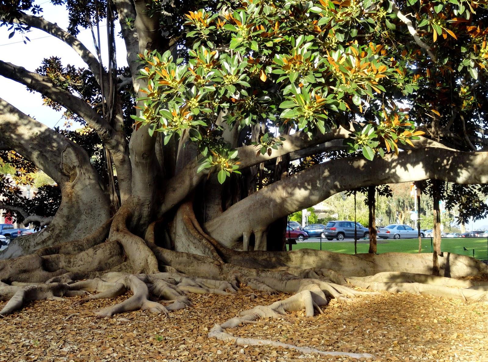 danger garden: San Diego\'s Balboa Park