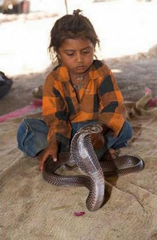 أطفال تتحدى الثعابين-طبيعة وحيوان-منتهى