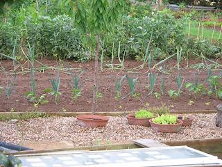 salad bowls, celeriac, onions, leeks, carrots, turnips, beetroot