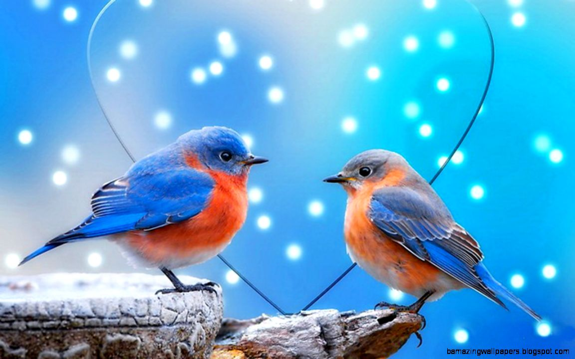 Love Birds couple Wallpaper : Free Download Images Of Love Birds Amazing Wallpapers