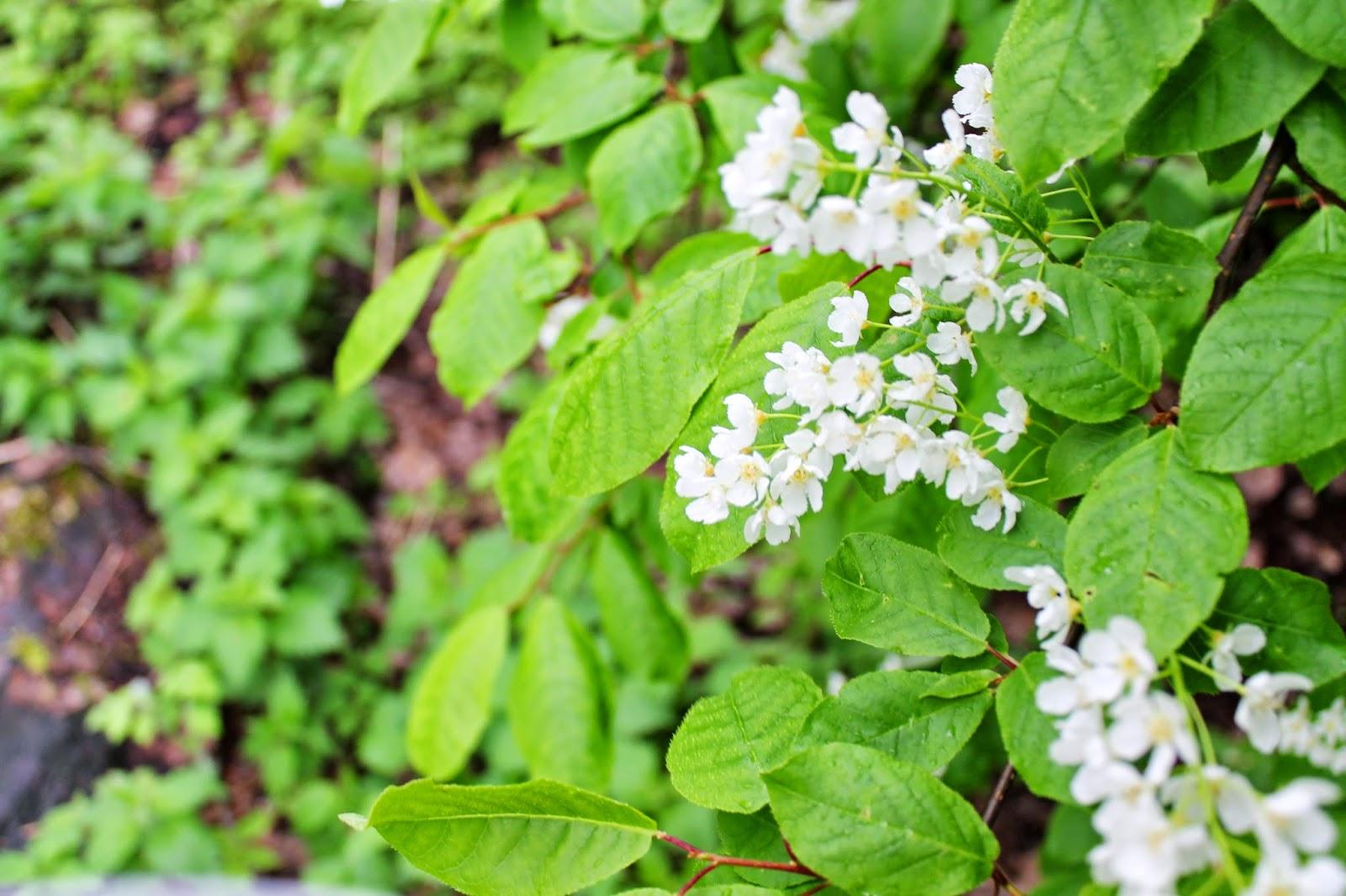 Forest flowers | Alinan kotona blog