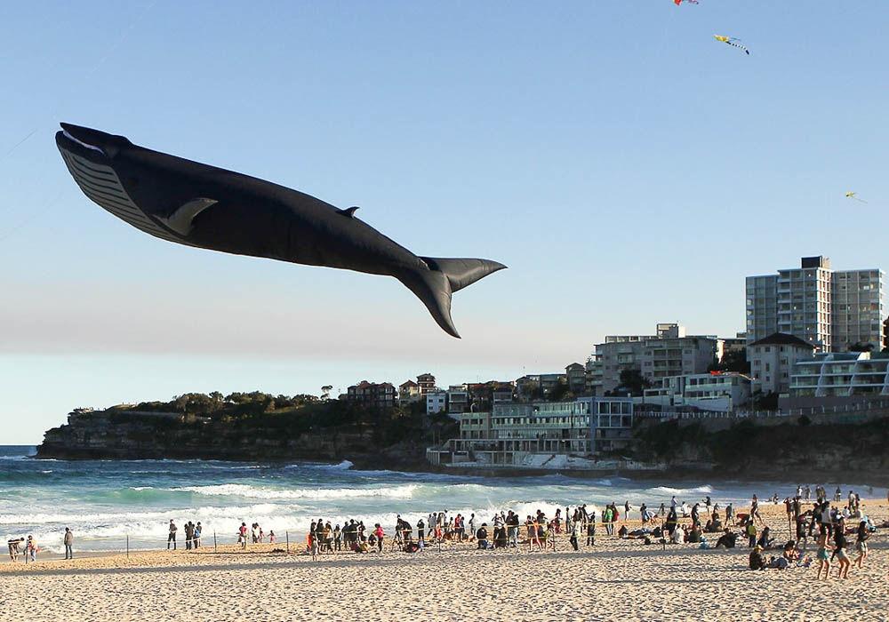Festival de pipas em Sydney, na Austrália