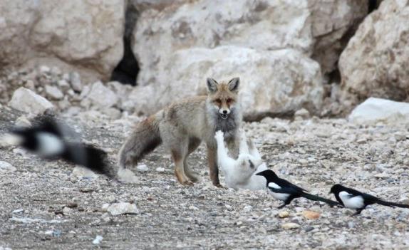 Il mondo in un giardino il gatto e la volpe - Come si fa il bagno turco ...