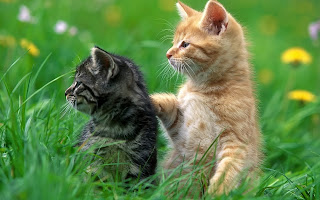 Kittens Wallpaper HD Wallpaper