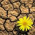 ARTIGO - Floresça no Deserto